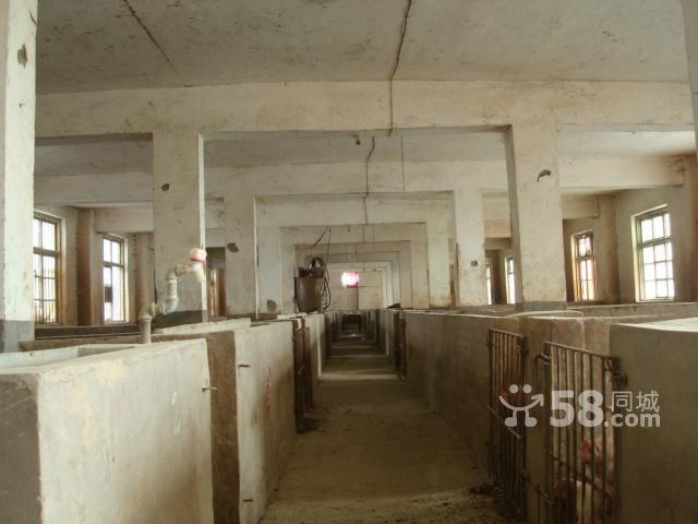 3500平米许昌饲料厂及其下属养猪厂出租-图(2)