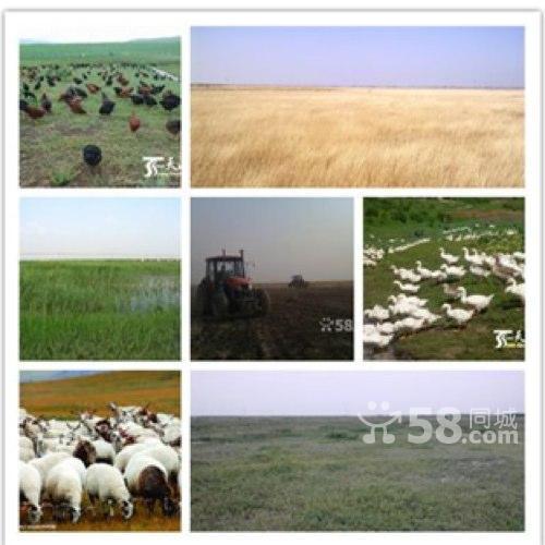 大面积耕种土地超便宜出租承包-图(1)