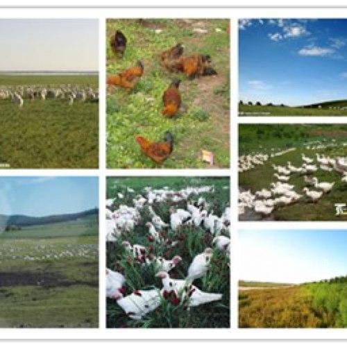 大面积耕种土地超便宜出租承包-图(2)