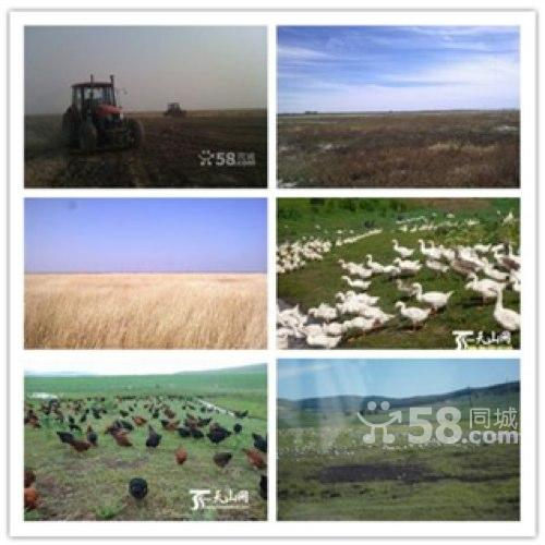 大面积耕种土地超便宜出租承包-图(3)