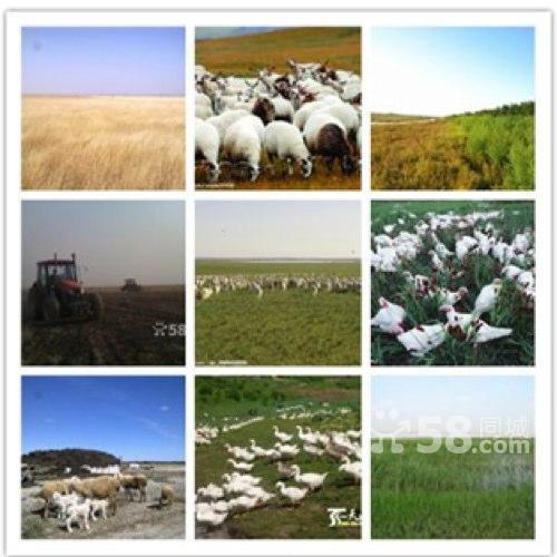 大面积耕种土地超便宜出租承包-图(4)