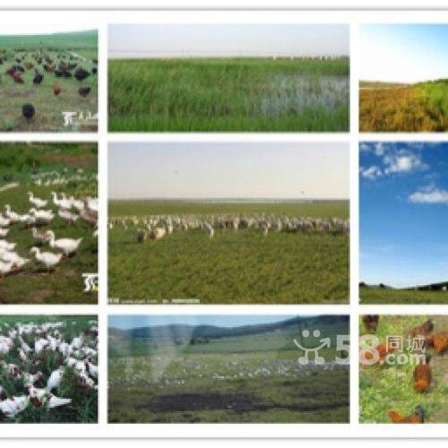 转让耕种土地超便宜出租承包-图(2)