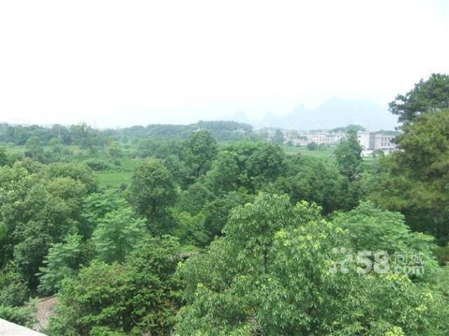 临桂真龙汽车城东面150500亩土地(水田)出租