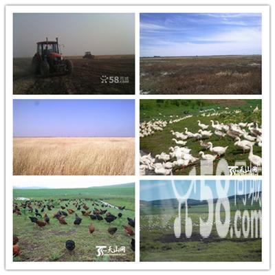 低价 出租 承包 种植 土地-图(1)