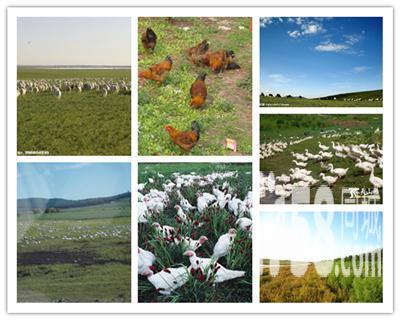 低价 出租 承包 种植 土地-图(5)