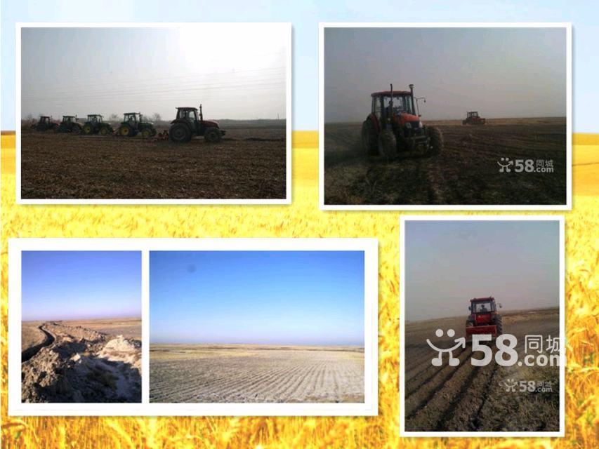 低价 出租 承包 种植 土地-图(8)