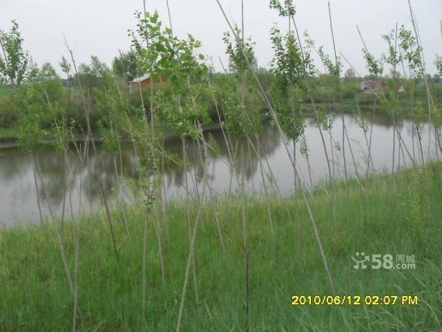 个人低价出售养殖厂带鱼池可作度假村-图(8)