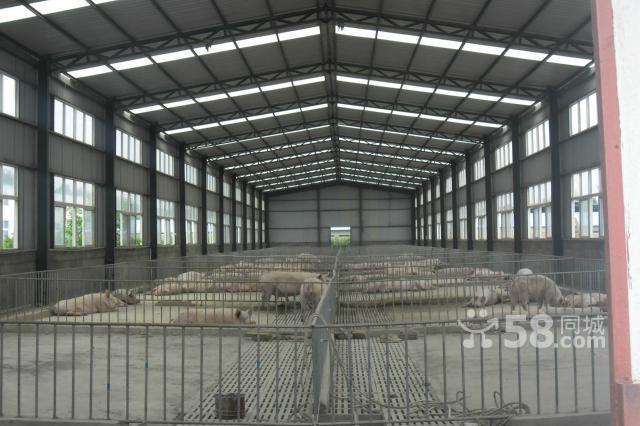 3亩 新建3间大型钢结构厂房  2层办公楼总面积:1200平米  配有员工