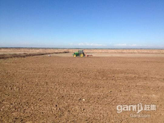 新疆喀什交通便利10000亩肥沃良田有机农业超低价转让-图(4)