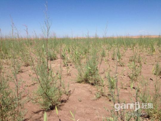 新疆喀什交通便利10000亩肥沃良田有机农业超低价转让-图(6)