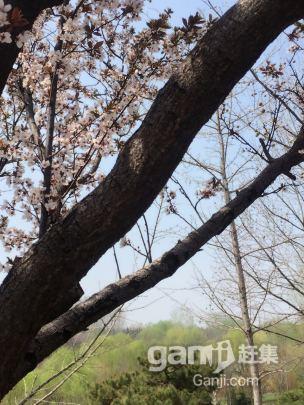 乔店水库附近山庄出租-图(1)