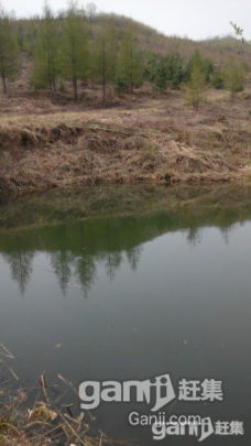 出租出售30公顷已围栏生态沟-图(1)