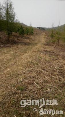 出租出售30公顷已围栏生态沟-图(2)