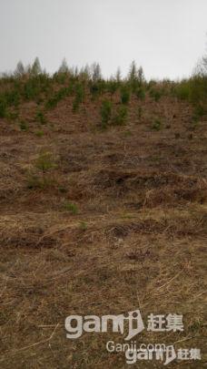 出租出售30公顷已围栏生态沟-图(3)