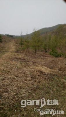出租出售30公顷已围栏生态沟-图(5)