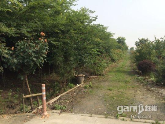 江苏镇江丹阳农用地林地整体部分转让都行-图(2)