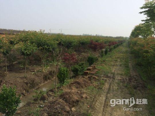 江苏镇江丹阳农用地林地整体部分转让都行-图(5)
