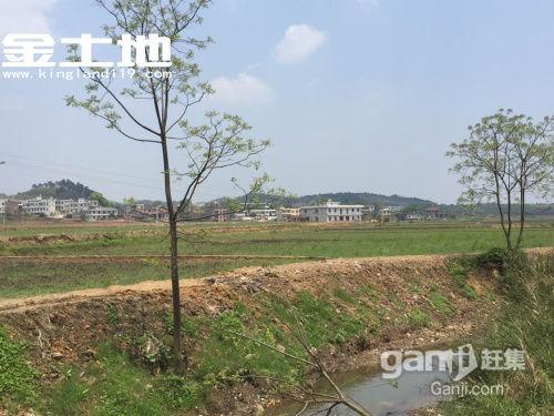 湖南郴州永兴上万亩土地出租-图(4)