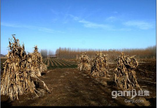 吐鲁番艾丁湖200亩土地低价出售-图(2)
