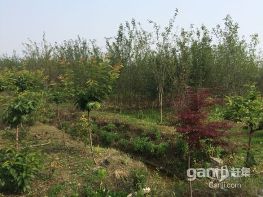 江苏镇江丹阳农用地林地整体部分转让都行-图(6)