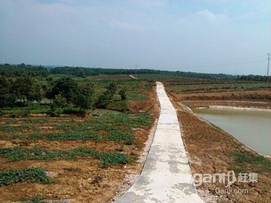 林地庄园出让-图(1)