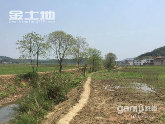 湖南郴州永兴上万亩土地出租-图(5)