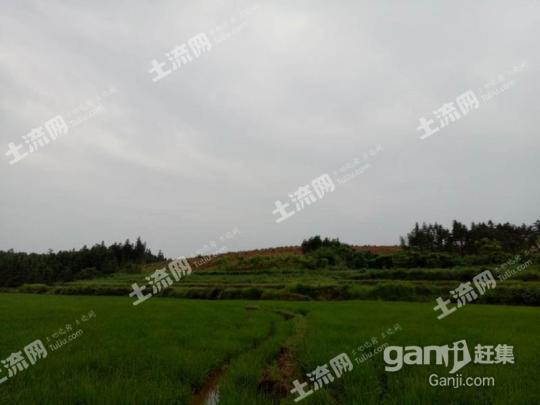 湖南常德桃源县2000亩林地 — 有林地出租-图(1)