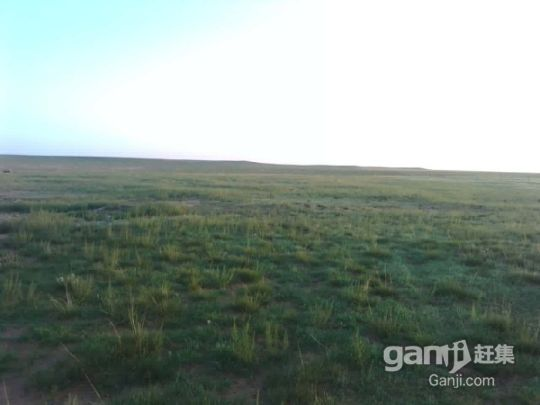 急转鄂托克旗阿尔巴苏三千亩优质草场-图(2)