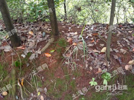 湖南常德桃源县2000亩林地 — 有林地出租-图(4)