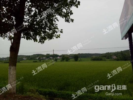 湖南常德桃源县2000亩林地 — 有林地出租-图(6)