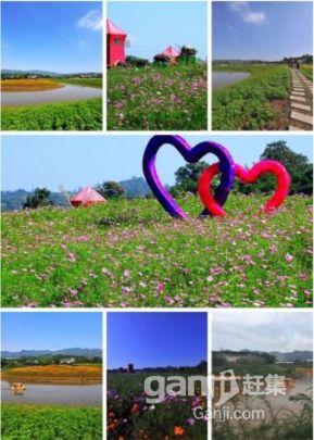重庆花木世界七色花水世界主题乐园招商-图(6)