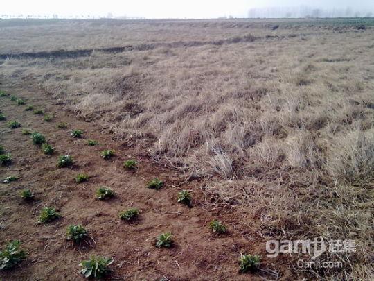 2000亩土地出租转让-图(1)