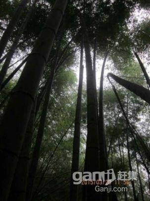 出租)1000多亩原生态森林出租(非中介)-图(6)