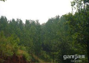 林地林权转让
