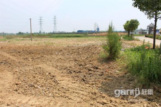 安庆白泽湖乡300亩农业耕地出租-图(2)