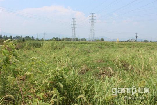 安庆白泽湖乡300亩农业耕地出租-图(3)
