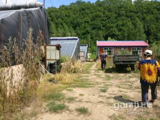 出售西丰县和隆乡大棚-图(5)