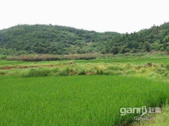 流转东乡县林地3500亩59年48元/亩/年-图(1)