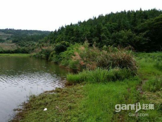 流转东乡县林地3500亩59年48元/亩/年-图(2)