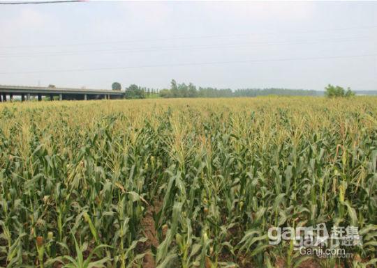 淮安洪泽区农业产业园(高速五里牌出口)1600亩优质良田出租-图(1)