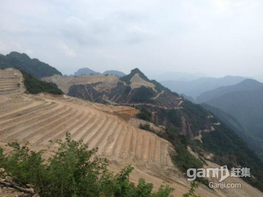 2000多亩山(非中介)出租-图(6)