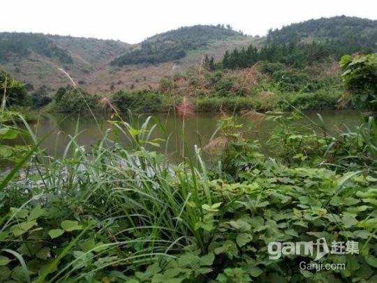 流转东乡县林地3500亩59年48元/亩/年-图(3)