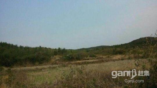 流转东乡县林地3500亩59年48元/亩/年-图(7)