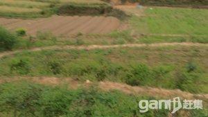 种植土地资源出租可以流转-图(1)