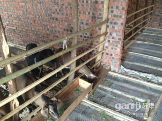 20亩养羊基地出租-图(2)