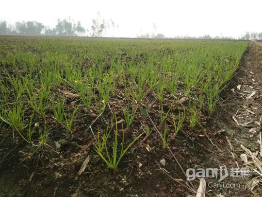 泸州周边近200亩综合养殖用地出租-图(2)