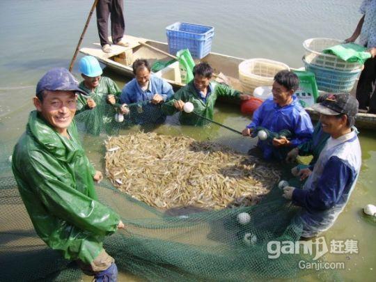 优质虾塘低价出租-图(2)