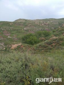 土地可种植养殖放牧建造-图(2)