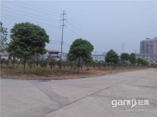 光谷东优质地段50亩土地/厂房/办公1万寻求合作(出租出售)-图(3)