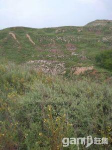 土地可种植养殖放牧建造-图(6)